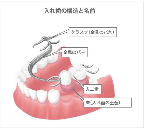 入れ歯の構造