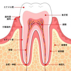 歯 が 痛く て 寝れ ない 薬効 かない
